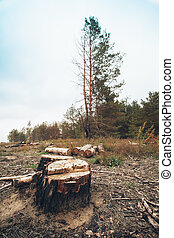 forestry - Logs trees after logging, wasteland stump Saw