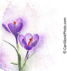 Crocus Flowers Watercolor - Digital Painting Of Crocus...