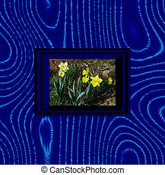 Narcissus in op art blue frame - White and yellow flowering...
