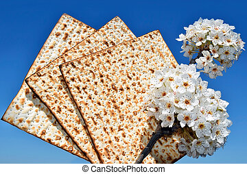 branch of a blossoming tree and matzo - jewish holiday of...