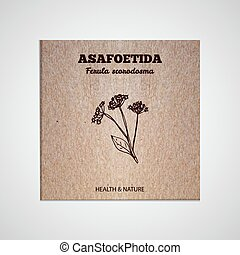 Herbs and Spices Collection - Asafoetida. Hand-sketched...
