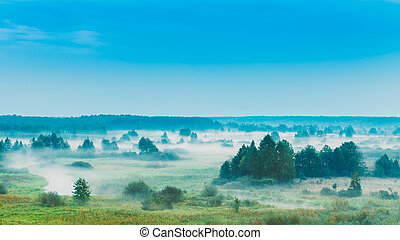 Russian Nature Landscape, Late Summer Forest In Morning Fog...