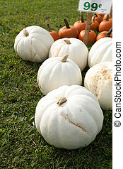White Pumpkins - White pumpkins picked and sitting in the...