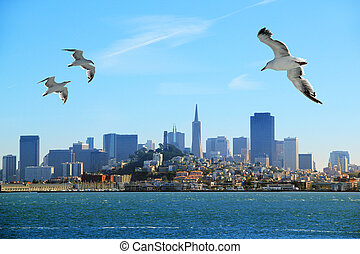 San Francisco - A flock of seagulls flying over the bay on...