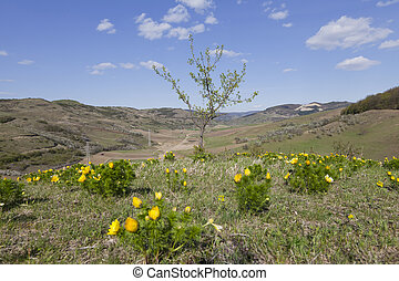 lone tree on hill with yellow flower around