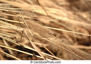 Flower grass with sunlight. - Flower of weed dry grass.