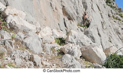 Caucasian person rock climbing - Caucasian man climbing up...