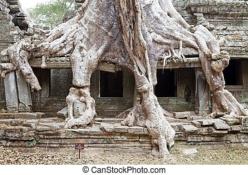 Preah Khan - Details of the tree roots on the gallery at the...