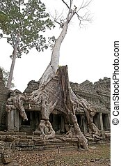 Preah Khan - The tree and tree roots on the gallery at the...