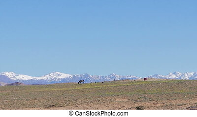 Morrocan Atlas Mountains - Morocccan family working on the...
