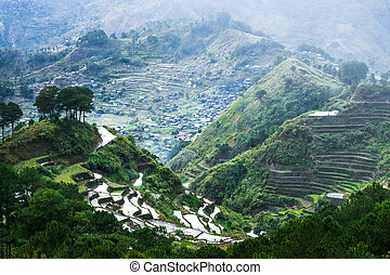 arroz, terraces., banaue, FILIPINAS,