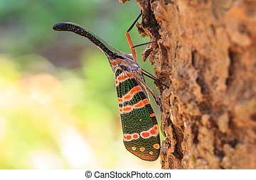 lanternflies insect, beauty insect on tree in forest