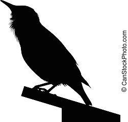 Detailed silhouette of bird - Detailed silhouette of common...