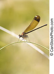 damselfly close up