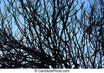 tree branches - Creative design of tree branches