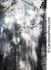 Bright sunlight through trees