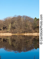 Marthaler Park Pond and Forest Reflections - marthaler park...