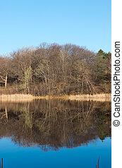 Marthaler Park Pond and Forest Reflections - marthaler park...