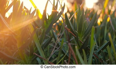 Morning scenics - Sunrise shining through the freshly grown...