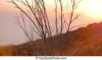 Evening scenics - Sunset shinight on the grassy side of the...