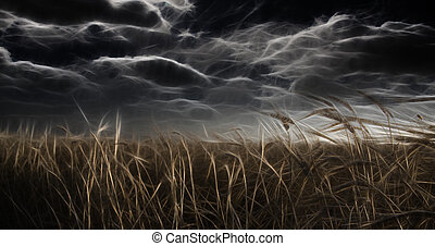 Dark Abstracted Field and Sky