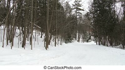 Snowy road in park in Canada - Snowy road during snowfall in...