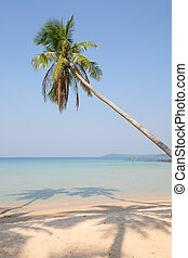 Coconut palm tree over luxury beach