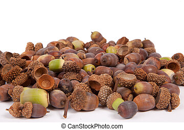 Acorns - A pile of acorns isolated on a white background.