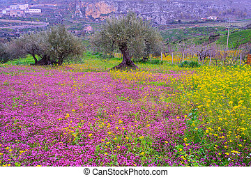 Sicilian countryside - View of Sicilian countryside in the...