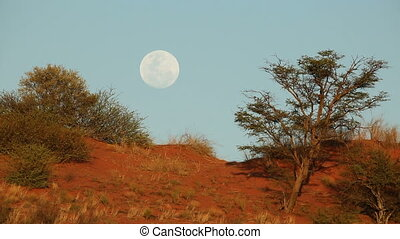 Kalahari moon landscape - Moon in blue sky over Kalahari...
