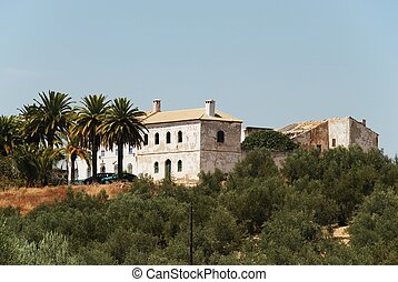 Spanish farmhouse, Montilla. - Olive grove with a farmhouse...