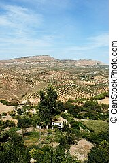 Spanish farmland, Andalusia - Farmland with olive groves on...