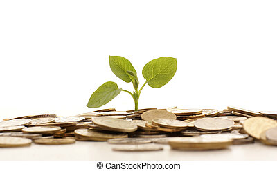 Money concept - Concept of a plant and a lot of golden coins...