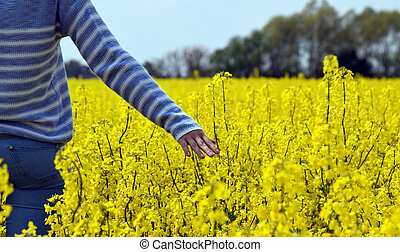 woman in the colza flowers - woman walking in the colza...