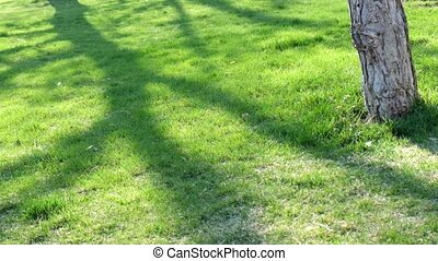 Low setting sun in green park casting long shadows on grass...