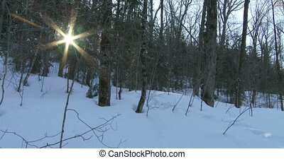 Sun shines between the trees in winter in Algonquin...