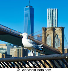 Seagull with Manhattan in background - Seagull with...