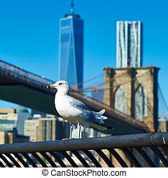 gaviota, con, Manhattan, en, fondo.,