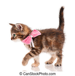 Cute kitten - Cute little kitten with a plush bow on a neck...