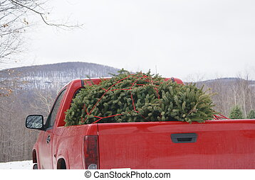 Bringing home the tree - a red truck with a freshly cut...