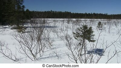 Panoramic view of Algonquin - Panoramic view of the wild...