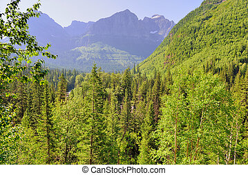 wilderness of the Glacier National Park