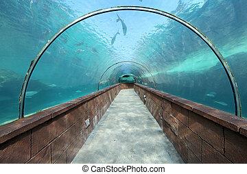 Aquarium Tunnel - Looking through an aquarium tunnel with...
