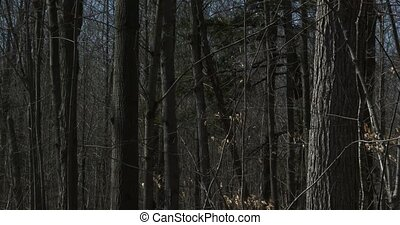 Sugar bush during harvest season - Sugar bush during maple...