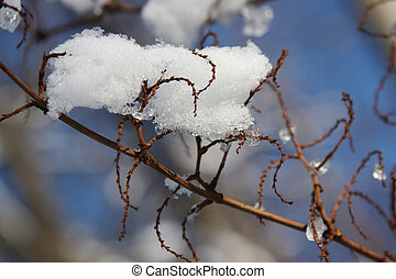 Branch under the melting snow and spring sun lit Closeup