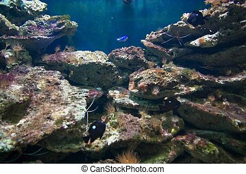 Sea aquarium - photo of the aquarium with tropical fishes