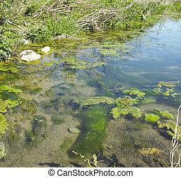 bog swamp in a meadow in la spezia