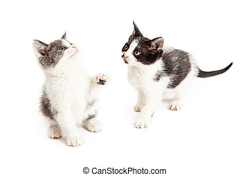 Two cute and playful kittens