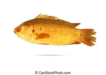 fish - Gold fish isolated on a white background