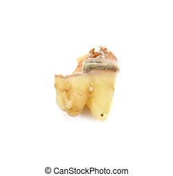tooth isolated on white background